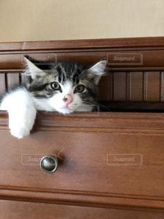 猫の日常の写真・画像素材[2700253]
