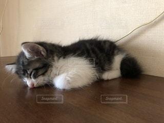 寝てる子猫の写真・画像素材[2700264]