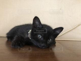 黒い表面に横たわっている猫の写真・画像素材[2703004]