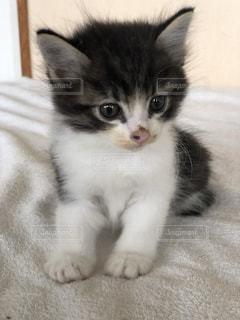 子猫ちゃんの写真・画像素材[2715772]