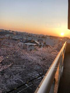 空,桜,太陽,景色,光,樹木,日の出
