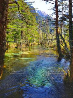 上高地/澄んだ川と樹木の写真・画像素材[793615]