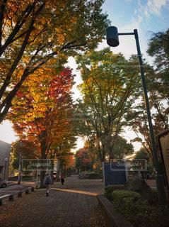 紅葉の進んだ散歩道の写真・画像素材[841441]