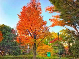 公園の紅葉の写真・画像素材[849462]