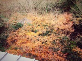 綺麗な紅葉の写真・画像素材[878050]