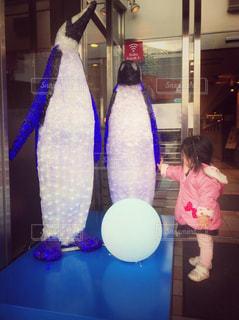 電飾ペンギンさんに興味津々の写真・画像素材[899432]