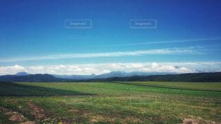緑豊かな緑のフィールドの写真・画像素材[910613]