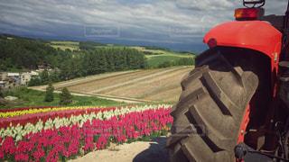 トラクターバスでお花畑をの写真・画像素材[912221]