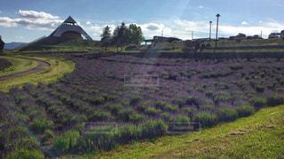 ラベンダー畑と展望台の写真・画像素材[912343]