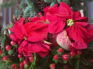 花,冬,赤,フラワーアレンジメント,フラワー,松ぼっくり,クリスマス,ポインセチア,グリーン