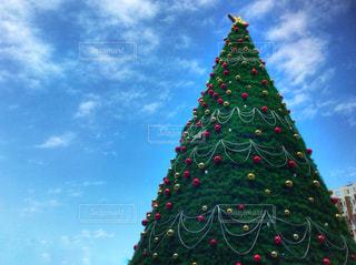 空,冬,屋外,青空,星,クリスマス,クリスマスツリー,スター,Xmas,オーナメント