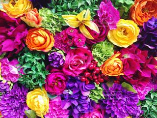カラフルな花の写真・画像素材[966225]