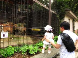 パパと動物園の写真・画像素材[967004]