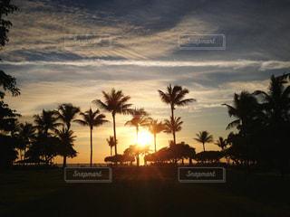 夕陽に染まるパームのシルエットの写真・画像素材[983038]