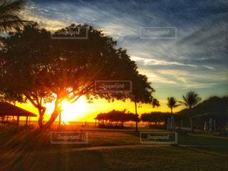 背景の夕日とツリー - No.986492