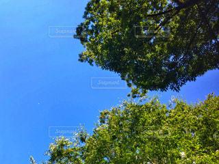 近くの木のアップの写真・画像素材[996409]