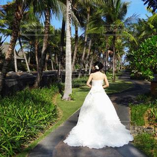 女性,屋外,海外,後ろ姿,結婚式,花嫁,人物,ウェディングドレス,ヤシの木,ポートレート,バリ島,ガーデンウェディング,パーム,挙式,ガーデン,ウェディング,リゾートウェディング,海外ウェディング