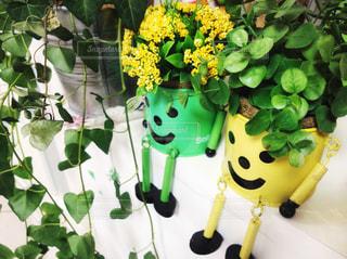 グリーン&お花の写真・画像素材[1036357]