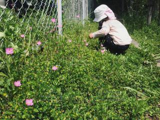 花摘みぬ夢中な女の子の写真・画像素材[1164954]