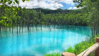青い池の写真・画像素材[1194880]