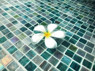 タイル張りの床に花の写真・画像素材[1201708]