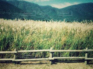 すすき野原の写真・画像素材[1233103]