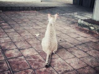 レンガの壁の前に立っている猫の写真・画像素材[1236049]