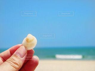ビーチで貝殻拾いの写真・画像素材[1312671]