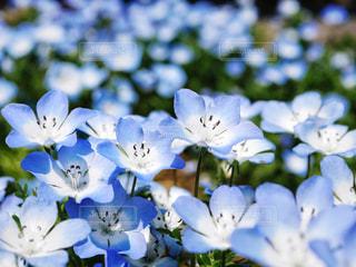 近くの花のアップの写真・画像素材[1314817]