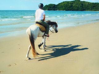 乗馬体験の写真・画像素材[1424676]