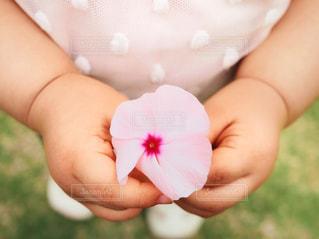 子ども,花,キッズ,芝生,庭,ピンク,フラワー,手,女の子,水玉,幼児,2歳,ピンク色,桃色,娘,pink,ペチュニア,ぷにぷに,むちむち,両手,持つ,添える