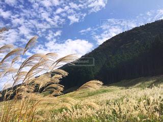 芝生のフィールドで植物の写真・画像素材[1486219]