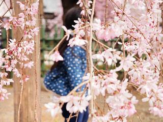 ピンクの花と女の子の写真・画像素材[1876042]