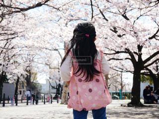 ピンクの景色の写真・画像素材[1971619]