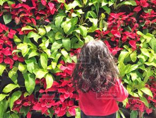赤とグリーンの壁の写真・画像素材[2232791]