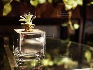 観葉植物の写真・画像素材[2726069]