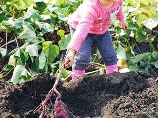 土の中に立っている小さな女の子の写真・画像素材[2829277]