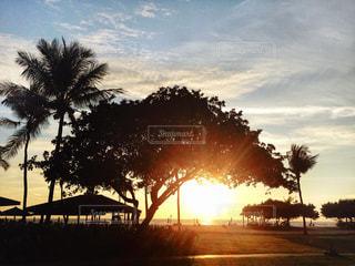 自然,風景,空,夕日,屋外,太陽,南国,ビーチ,夕焼け,夕暮れ,夕方,シルエット,光,樹木,ヤシの木,夕陽,サンセット,海外旅行,草木,ボルネオ島