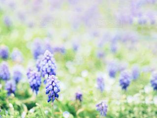 花のクローズアップの写真・画像素材[2988322]