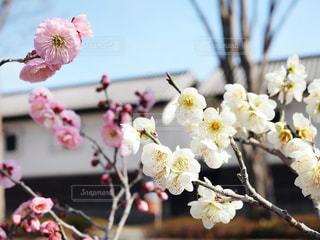 花のクローズアップの写真・画像素材[3014525]