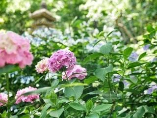 花のクローズアップの写真・画像素材[3376018]
