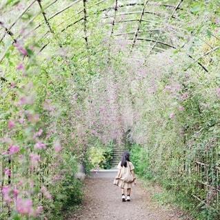 萩のトンネルを進む女の子の写真・画像素材[4066084]