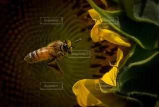 近くの花のアップの写真・画像素材[1374090]