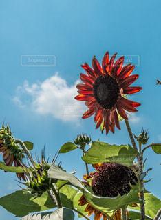 近くの花のアップの写真・画像素材[1374114]