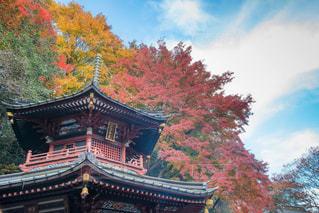 紅葉,神社,秋空,水澤観音
