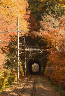 下り列車を走行する列車は森の近く追跡します。の写真・画像素材[1598596]