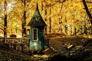 森の中の家の写真・画像素材[1602642]