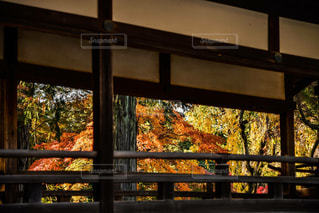 大きなガラス窓の写真・画像素材[1602648]