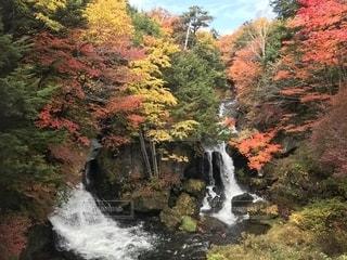 木々 に囲まれた滝の写真・画像素材[1611783]