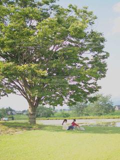 自然,公園,木,緑,休日,お出かけ